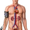 Understanding Blood Pressure | Human Anatomy and Physiology